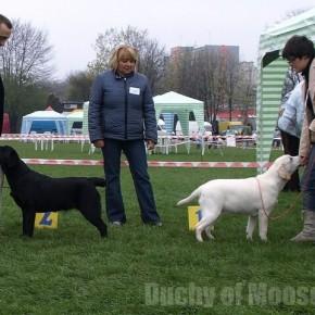 Częstochowa 2008 - wystawowy weekend (19-20.04.2008)