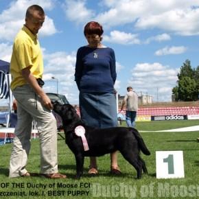 22.06.2008 - Marijampole, Litwa - wspaniałe sukcesy naszych Labradorów