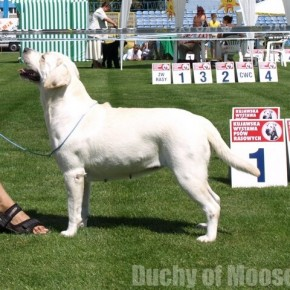27.07.2008, Włocławek - kolejne sukcesy naszych labradorów!