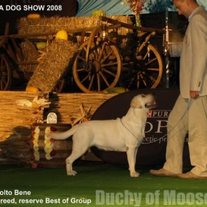 DRACULA DOG SHOW & ROMANIAN OPEN 2008