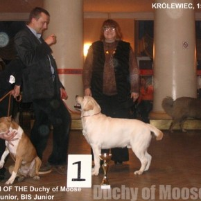 Królewiec (Rosja), 15.02.2009 - GUCIO Młodzieżowym Championem Rosji!