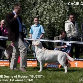 CACIB Opole 2009